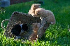 Söta små kattungar arkivbilder