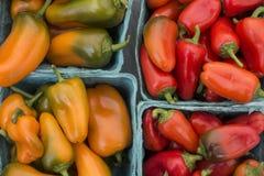 Söta Snacking peppar för Lunchbox royaltyfri fotografi