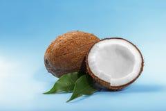 Söta spruckna kokosnötter och gröna blad på ett ljus - blå bakgrund Smaklig kokosnöt som klipps i halva Healthful organiska muttr Fotografering för Bildbyråer