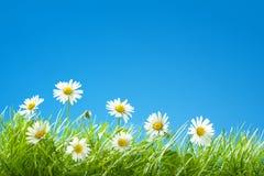 Söta tusenskönor i gräs med kopieringsutrymme för blå himmel royaltyfria foton