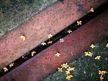 Sötsak-vädrad osmanthusblomma som ligger på jordningen Royaltyfria Bilder