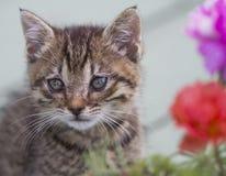 Sötsaken behandla som ett barn Kitty Cat med Gray Eyes arkivfoton