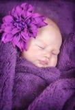 Sötsaken behandla som ett barn sömn Royaltyfria Bilder
