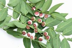Sött blad och frukter Arkivfoto
