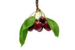 sött Cherry arkivfoto