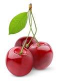 sött Cherry Royaltyfri Bild