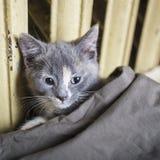 Sött en kattunge som ligger under räkningarna nära ett gammalt varmt element royaltyfri fotografi
