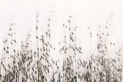 Sött gräs fotografering för bildbyråer