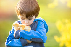 Sött gulligt barn, förskole- pojke som spelar med liten nyfödd chi royaltyfria bilder