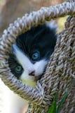 Sött lite svartvit kattunge royaltyfri bild