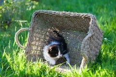 Sött lite svartvit kattunge royaltyfria foton