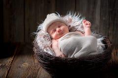 Sött nyfött behandla som ett barn att sova i korgen Arkivfoto