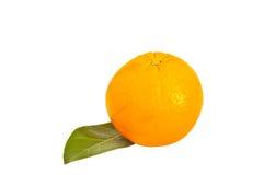 Sött orange arkivfoto