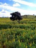 sött växt av släkten Trifoliumfält Arkivbilder