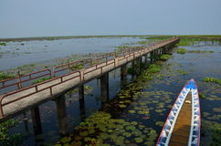 Sötvatten på Thalenoi Phatthalung Thailand Arkivfoton