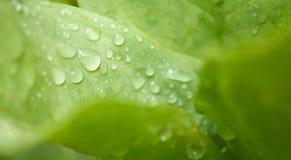 Sötvattendroppe på grennbladbakgrund Royaltyfria Foton