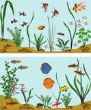 Sötvattens- akvarium Royaltyfria Bilder
