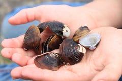 sötvattens- clamshells Royaltyfri Foto
