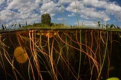 Sötvattens- damm och tova av Lily Pads Arkivfoto
