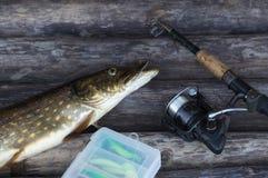 Sötvattens- fisk och metspö för nordlig pik med rullen som ligger på tappningträbakgrund royaltyfri foto