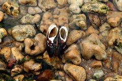Sötvattens- musslor, vatten- tvåskaligt skaldjurmulluscsunionoida fotografering för bildbyråer