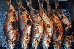 Sötvattens- WhitefishCoregonuslavaretus på sjön Sevan Royaltyfria Bilder