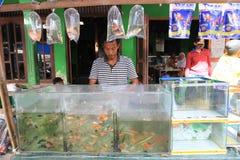 Sötvattensfisk arkivfoton