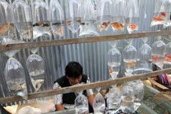 Sötvattensfisk royaltyfri fotografi
