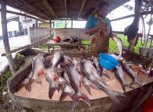 Sötvattensfisk royaltyfri bild