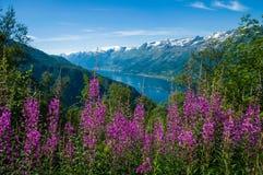 Sørfjord z kwiatami w przedpolu Fotografia Royalty Free