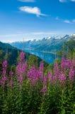 Sørfjord z kwiatami w przedpolu Zdjęcie Royalty Free