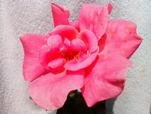 Süße Blumen Lizenzfreies Stockfoto