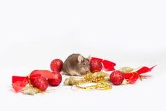 Süße braune Maus, die unter Rot und Goldweihnachtsdekorationen sitzt Stockbild