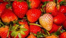 Süße Erdbeeren Lizenzfreie Stockfotografie