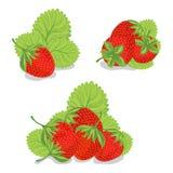 Süße Erdbeeren auf einem weißen Hintergrund Stockbilder