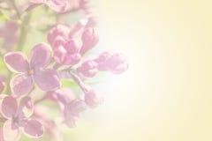 Süße Farbblumenblattniederlassung mit rosafarbenen lila Blumen des Frühlinges auf gelbem romantischem Hintergrund Lizenzfreie Stockfotos