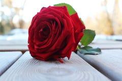 Süße Farbe der Rotrosen-Blume auf Boden draußen lizenzfreies stockfoto