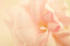 Süße Farbrosen in der weichen Farb- und Unschärfeart auf Maulbeerpapierbeschaffenheit Lizenzfreies Stockbild