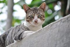 Süße Katze Stockfotos