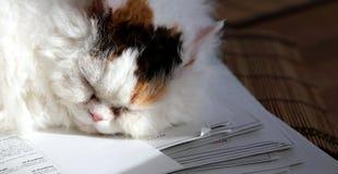 Süße Katze, die auf einem Stapel Papiere classtests schläft stockfoto