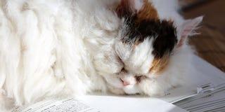Süße Katze, die auf einem Stapel Papiere classtests schläft stockbild
