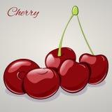 Süße Kirschen der Karikatur auf grauem Hintergrund, Vektorillustration Stockbild