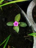 Süße kleine Blume Lizenzfreie Stockfotos