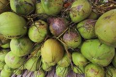 Süße Kokosnuss Stockbild