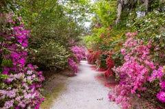 Süße Magnolien stockfotografie