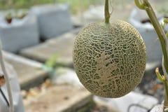 Süße Melone Japaner Kimochi mit chinesischem Alphabet Lizenzfreies Stockbild