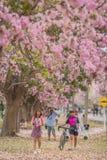 Süße rosa Jahreszeit der Blumenblüte im Frühjahr Lizenzfreies Stockbild
