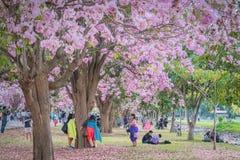 Süße rosa Jahreszeit der Blumenblüte im Frühjahr Lizenzfreie Stockbilder
