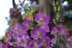 Süße rosa Orchideen Lizenzfreie Stockbilder