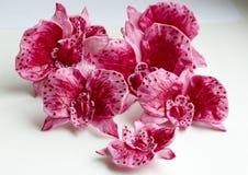 Süße rosa Orchideen für den Kuchennahaufnahme-Weißhintergrund lizenzfreie stockbilder